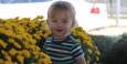 Eli liked walking among the mums (Farmer's Market, Nashville TN)